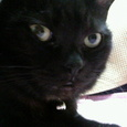 黒猫は・・・